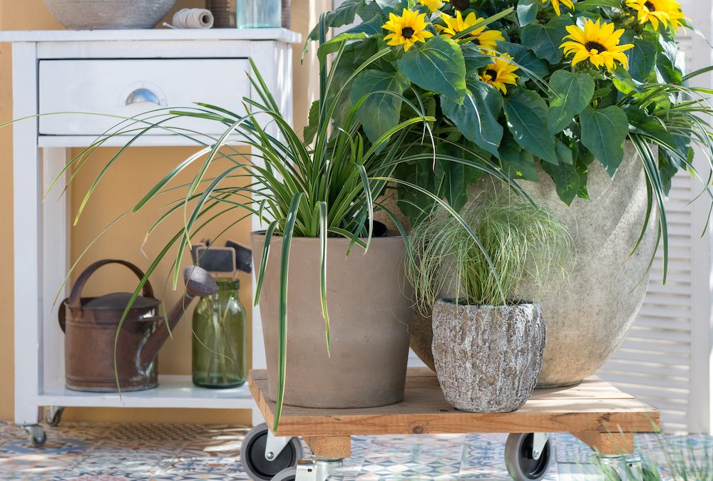 5 praktische tips voor nog meer tuinplezier
