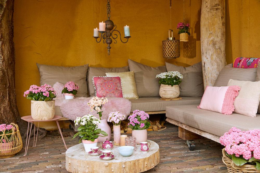 De ideale terrasplant is de Kalanchoë  'Garden'