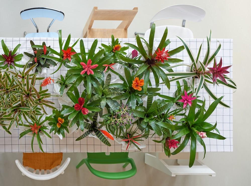 Groene trend: met kamerplanten een binnentuintje creëren