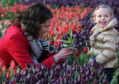 Gratis tulpen plukken in Amsterdam