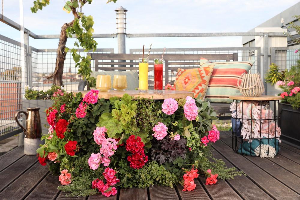 Kweek een bloemenparadijs met Geraniums