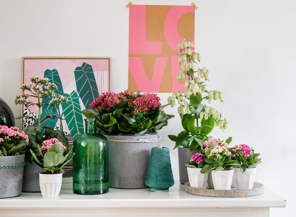 Groene energie met kleur in je interieur