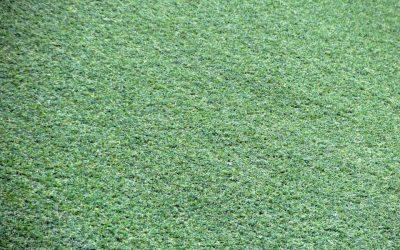 Gras zonder onderhoud?